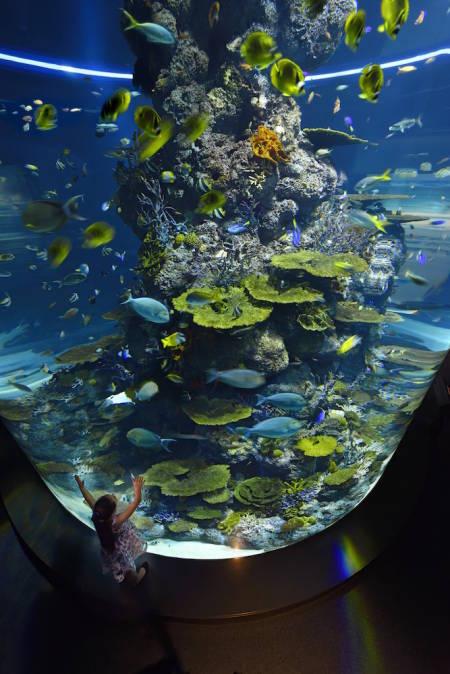 SEAA_CoralSea