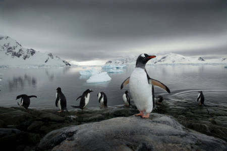 _MG_3886.Penguins. Paradise Bay. Antarctica