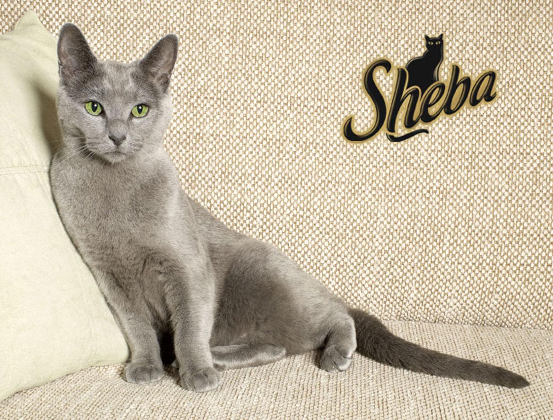Sheba242_5_047