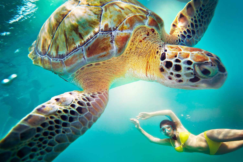 Snorkeling-Trip-RC-150419-C0228-V2_107