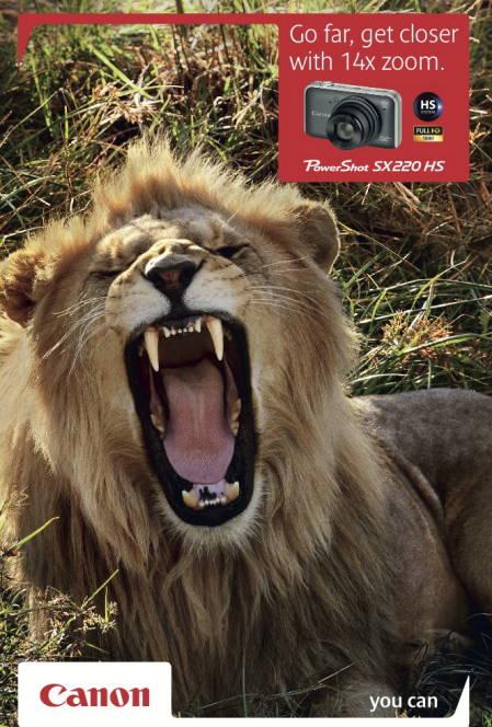 Cnon - Lion