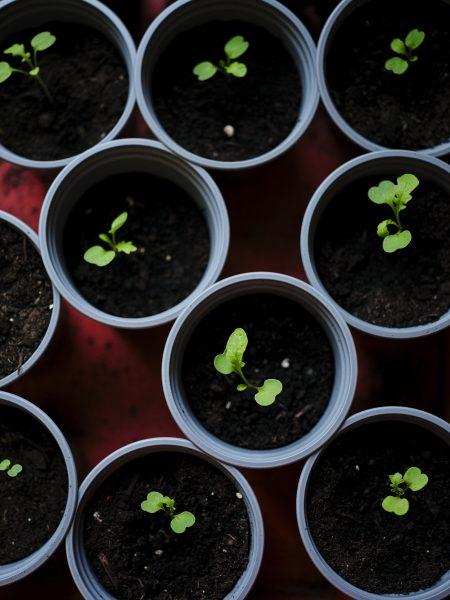 20201007_grow_1282_v1